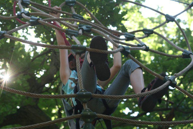 climbing-forest-906973_1920